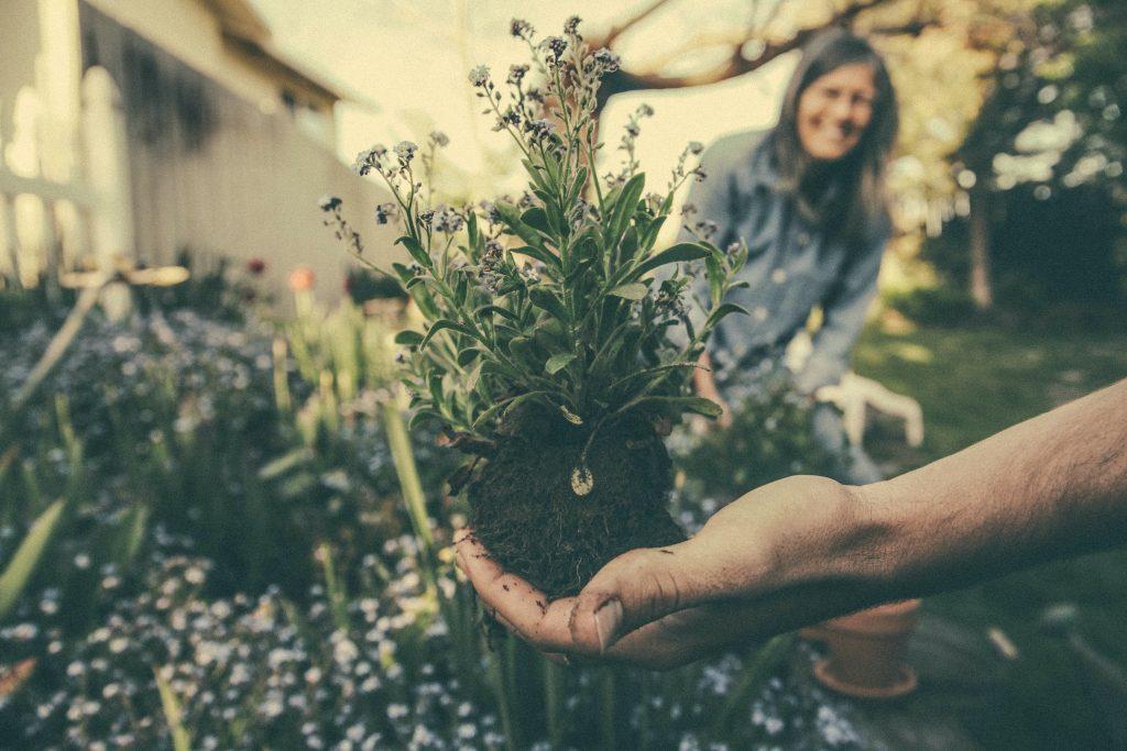 marketplace jardin en évolution